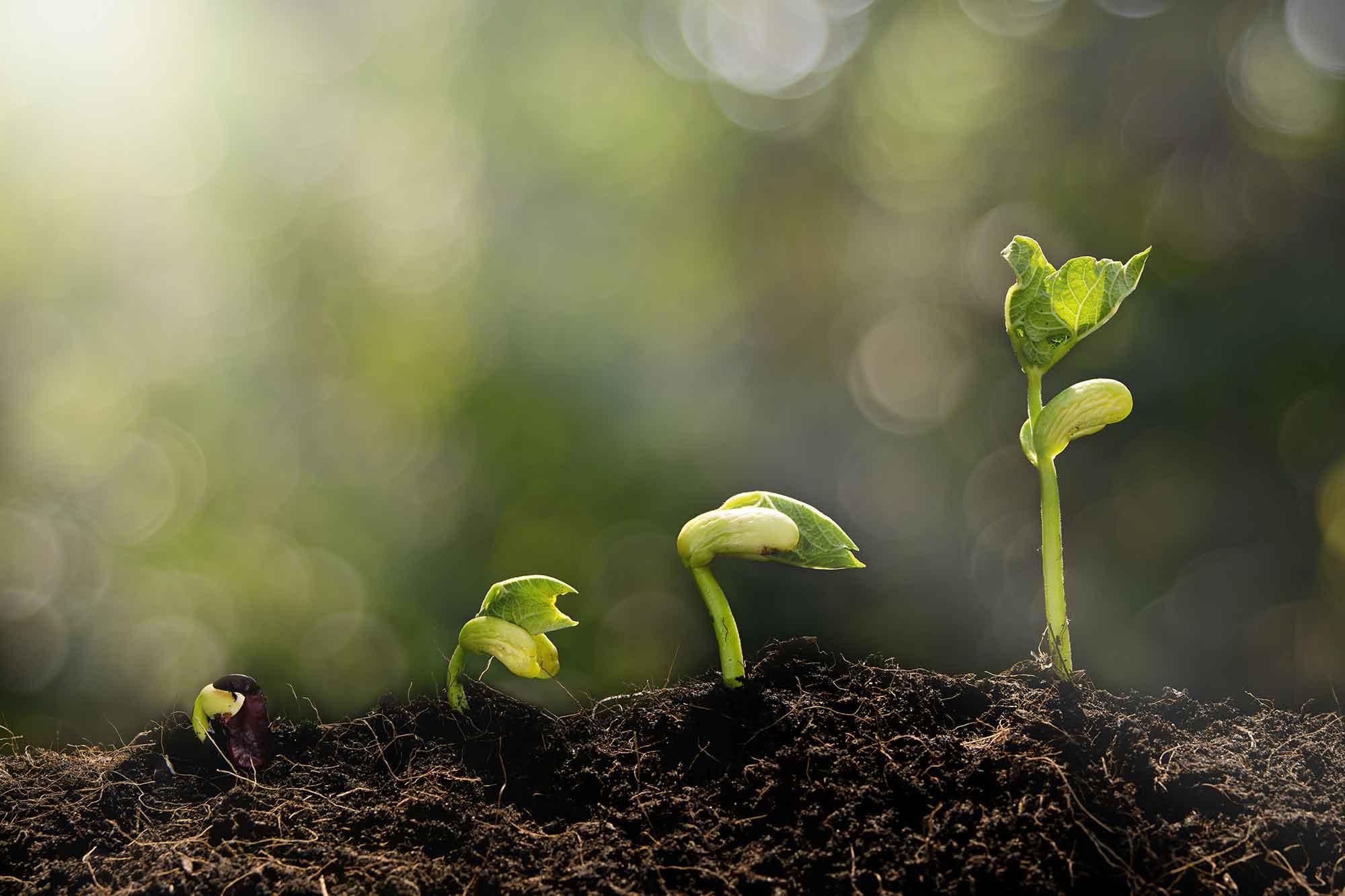 practice growth